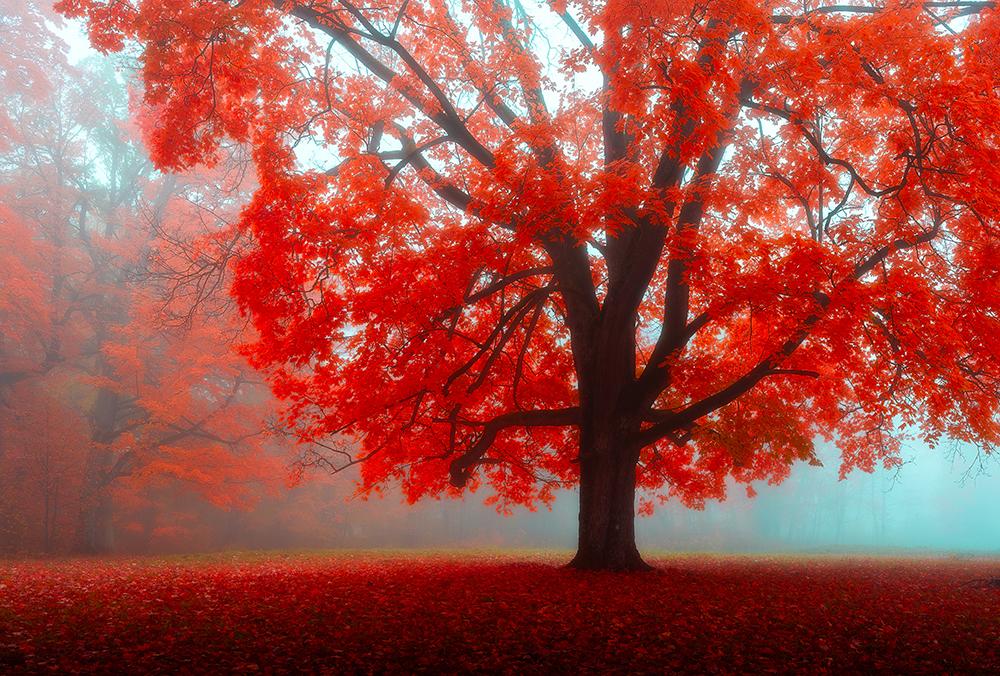 10 วิธีการใช้ทฤษฎีสีในการถ่ายภาพทิวทัศน์