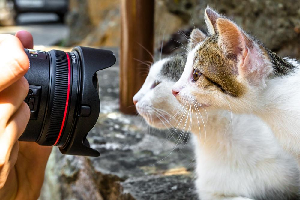 7 วิธีสำหรับช่างภาพมือใหม่หัดถ่ายภาพ close-up ให้ได้ภาพถ่ายที่สวยงามน่าสนใจ