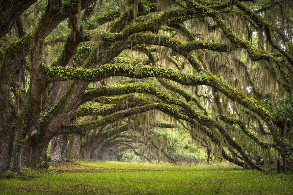 6 เทคนิคมือใหม่ในการถ่ายภาพป่าไม้ให้ดูน่าสนใจ สำหรับคนที่ชอบท่องเที่ยวและถ่ายภาพ