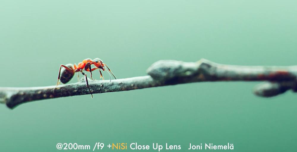7 ข้อเด่น NISI Close Up Lens ที่ช่วยให้ภาพถ่ายของเราสวยมากขึ้น