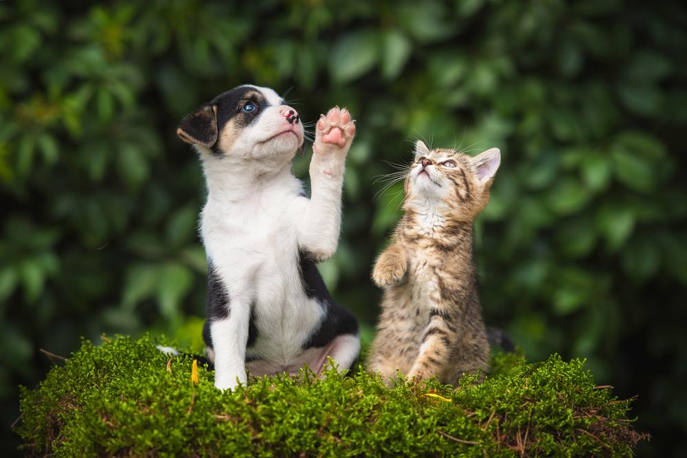 8 เทคนิคถ่ายภาพสัตว์เลี้ยง เพื่อเก็บความน่ารัก สดใส และมีชีวิตชีวา