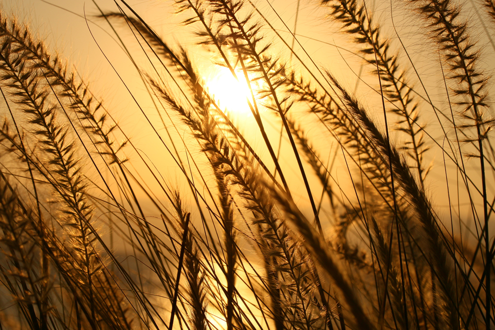การถ่ายภาพในช่วง GOLDEN HOUR ซึ่งเป็นช่วงที่ท้องฟ้าสวยที่สุดของวัน