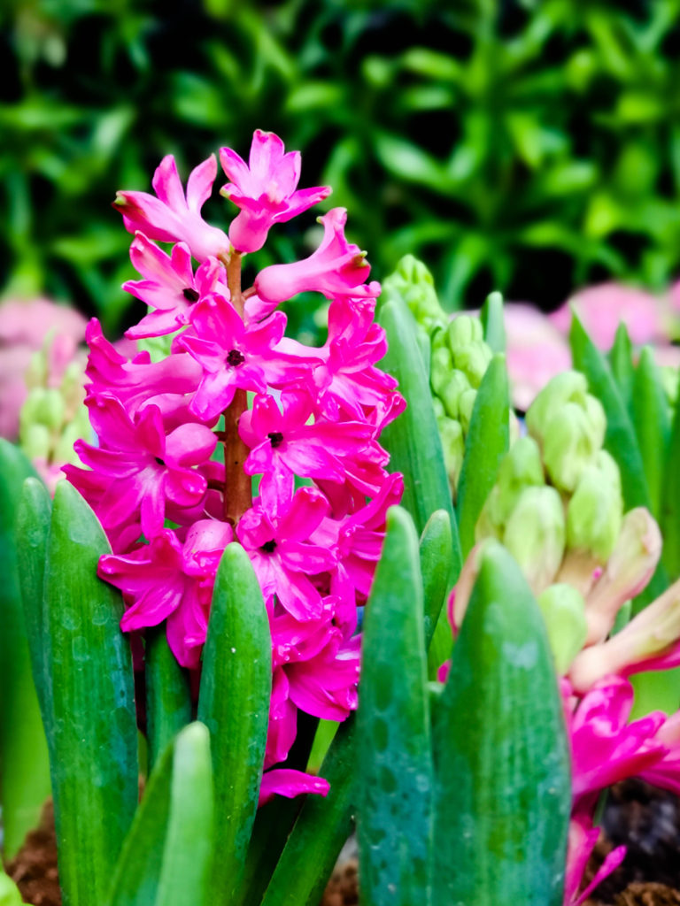 7 วิธีถ่ายภาพดอกไม้ ด้วยกล้องมือถือ การถ่ายทอดความงามอันมหัศจรรย์ของดอกไม้ผ่านกล้องมือถือ