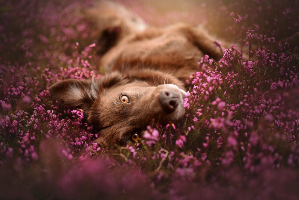 5 วิธีการถ่ายภาพกับสัตว์เลี้ยง ให้ออกมาดูน่ารัก และมีชีวิตชีวา