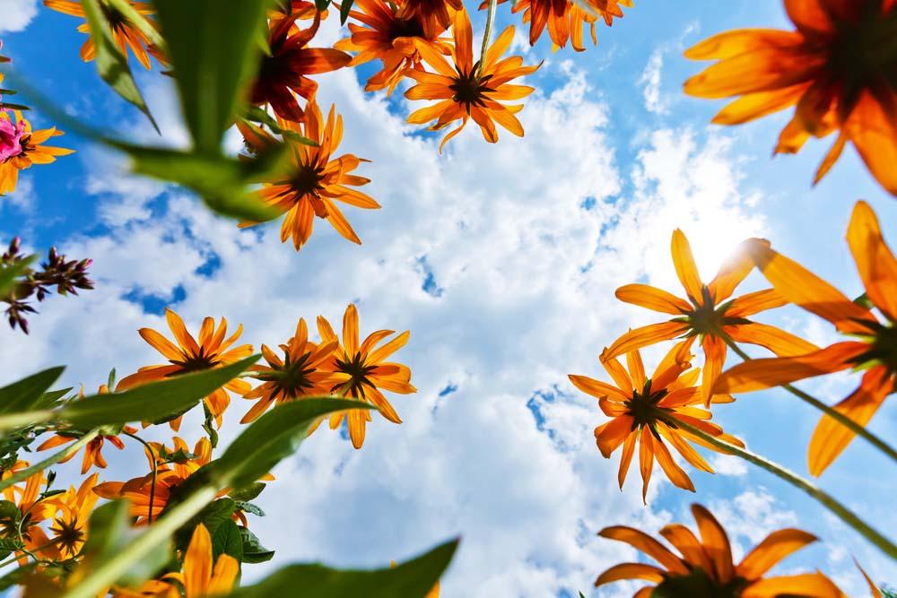 7 ไอเดียถ่ายภาพดอกไม้  เพื่อให้ดูสวยงามในรูปแบบการนำเสนอที่ต่างกัน