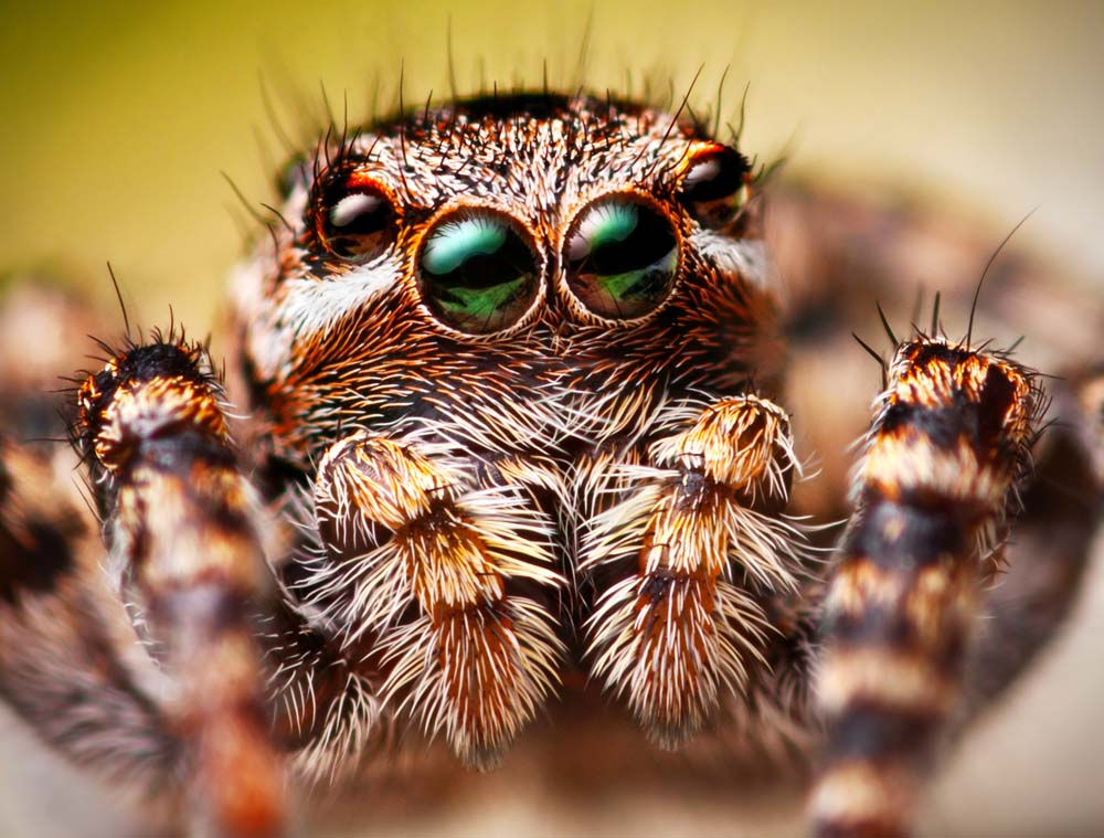 5 เคล็ดลับถ่ายภาพแมลงสำหรับมือใหม่ ให้สามารถถ่ายภาพได้สวย คมชัด